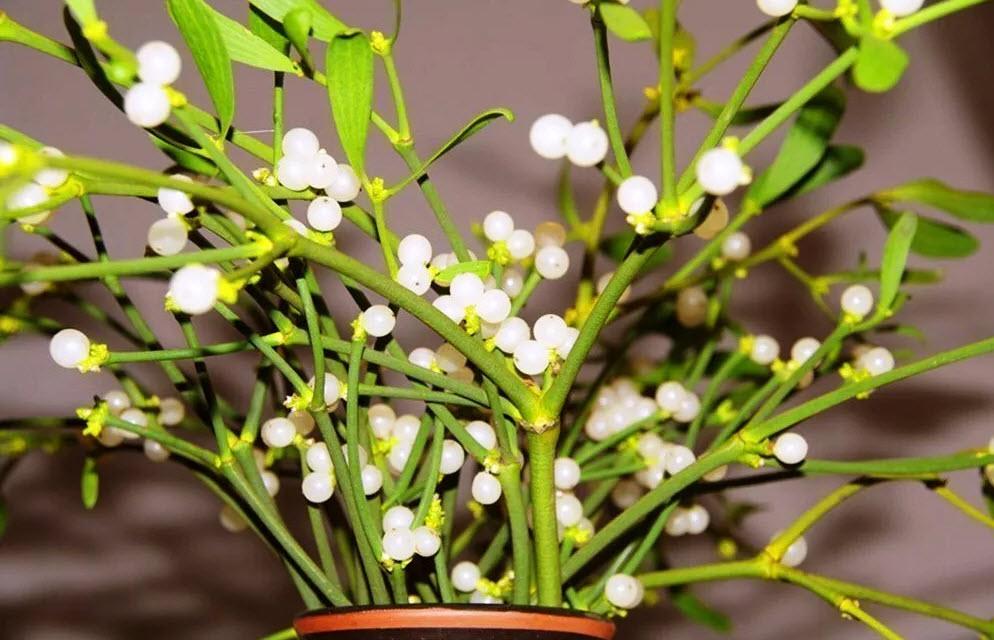 Фото для рабочего стола цветок сквозь асфальт все