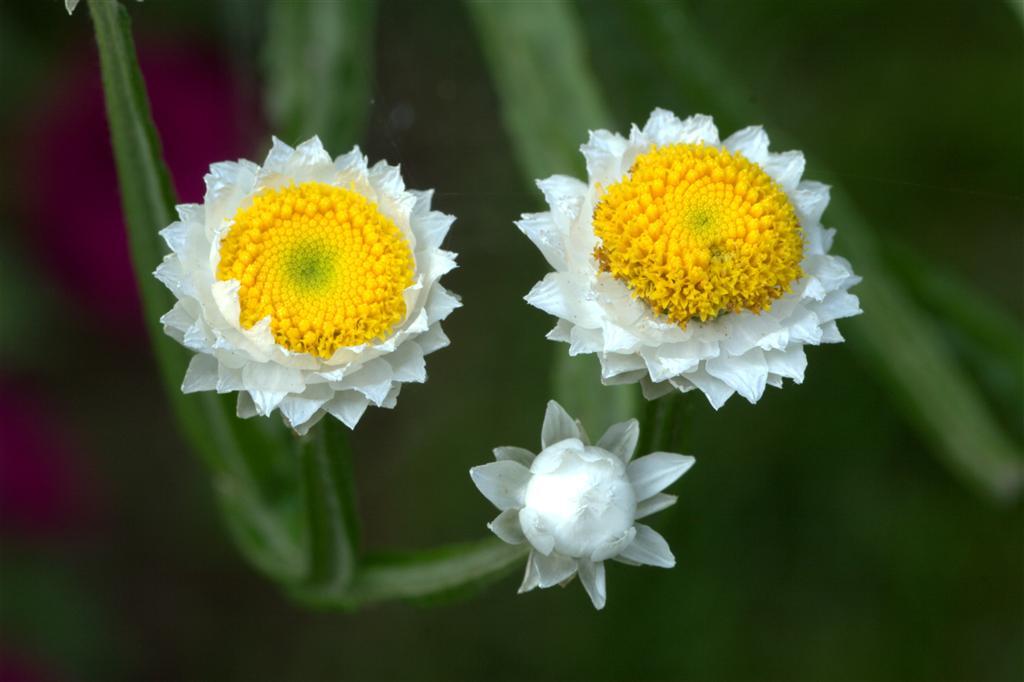 какие цветы можно поливать йодом